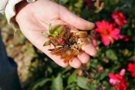 Чи зі всіх рослин можна зібрати насіння