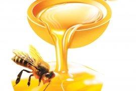 Коротко про мед!