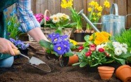 Квіти. Саджанці. декоративні рослини